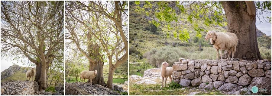 Hochzeitsfotograf-Mallorca-Privat-Familienfotos-NadjaOsieka_0004