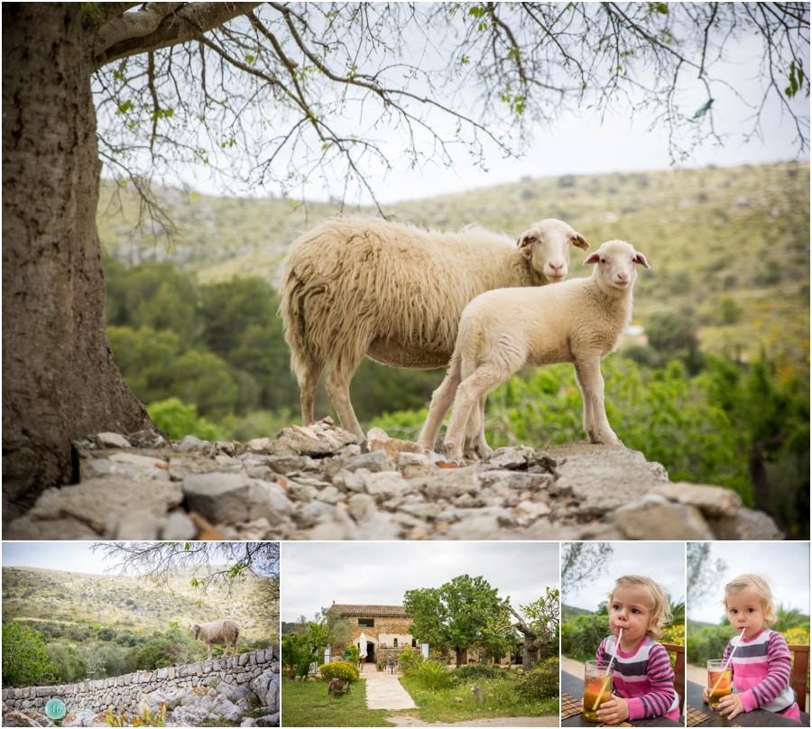 Hochzeitsfotograf-Mallorca-Privat-Familienfotos-NadjaOsieka_0006