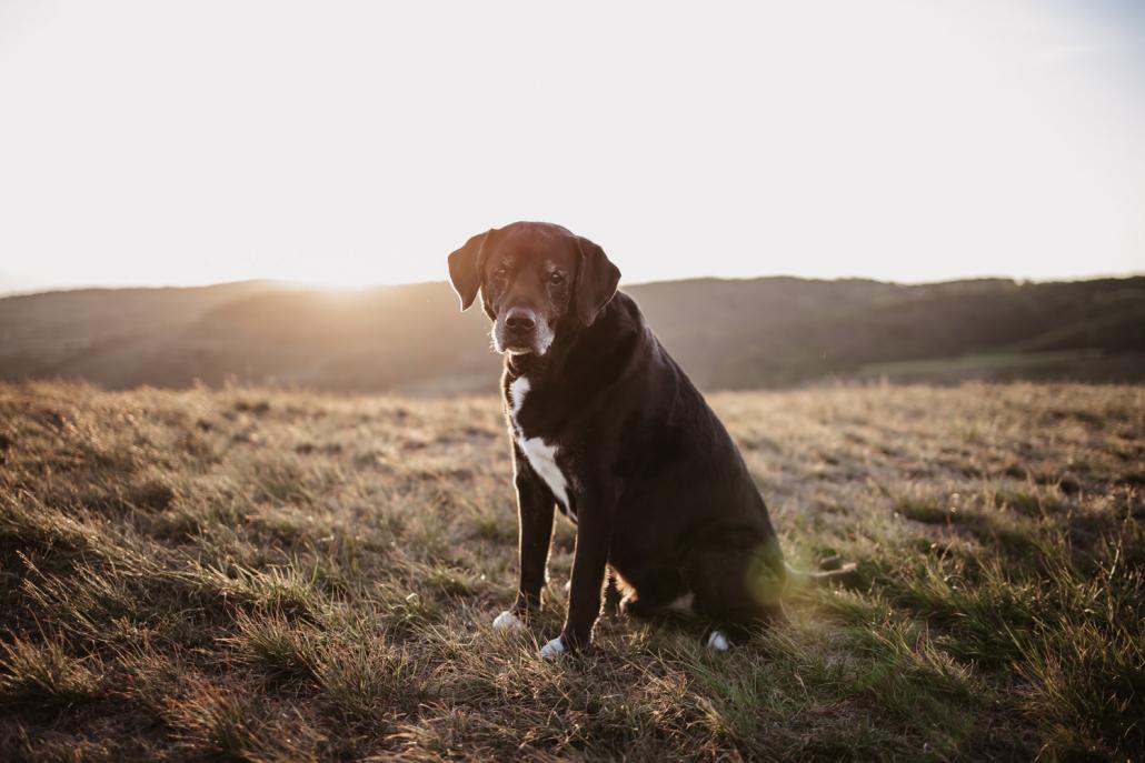 Hund auf dem Kaiserstuhl