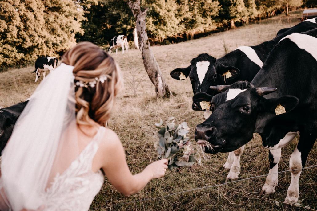 Braut mit Kühen